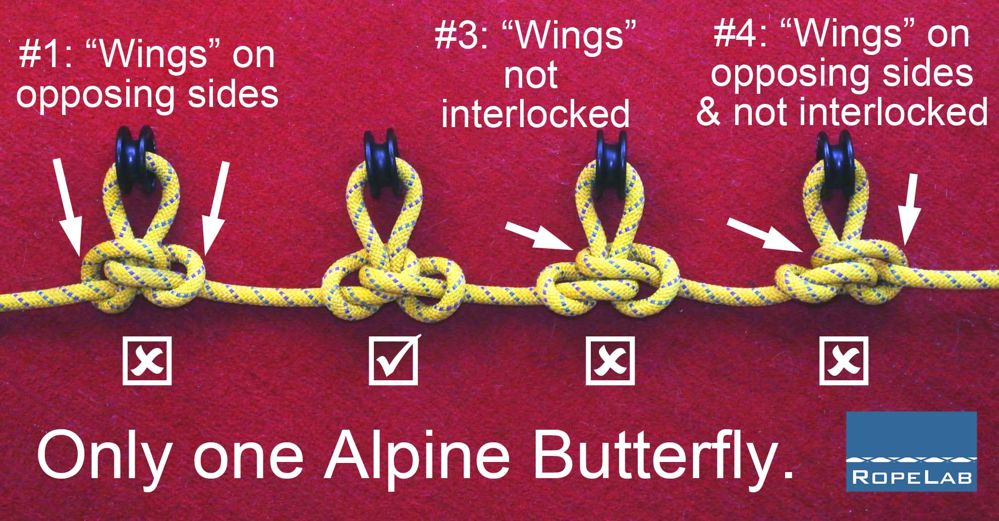 778a3ca020927 The Awesome Alpine Butterfly | RopeLab Online